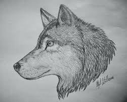 Wolf Drawing - Josh's Art Work