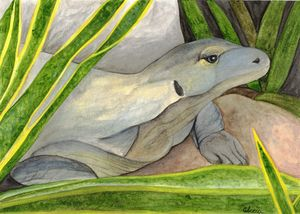 Komodo Dragon Watercolor