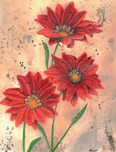 Red Gazania Flowers