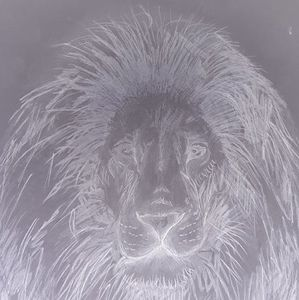 Pencil Drawing Lion