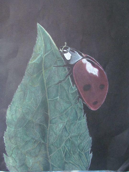 Lady Bug - CollegePicaso