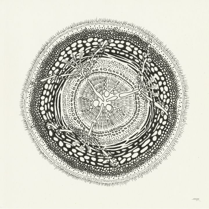 Cross Section Of A Gamma Ray - Dave Sloan