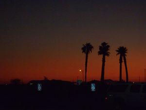 Desert Trees_5