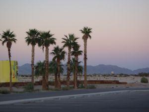 Desert Trees_3
