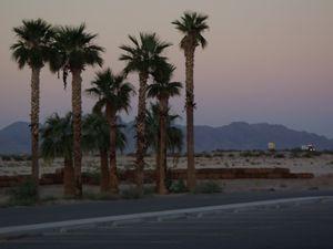 Desert Trees_2
