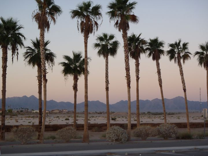 Desert Trees_1 - James A Young Jr