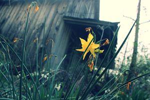 Beauty among decay