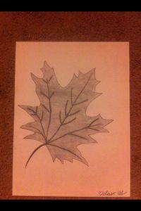 Charcoal leaf drawing