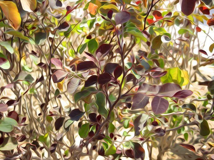 Beautiful Plants - Looly Elzayat