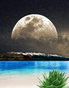 Aloe Vera Moon Beach