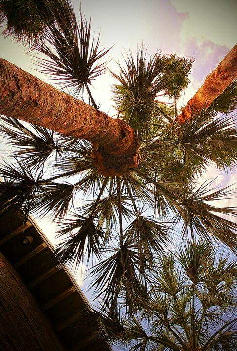 Palms - Daniela Gonzalez