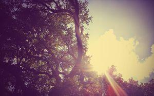 Sunglight