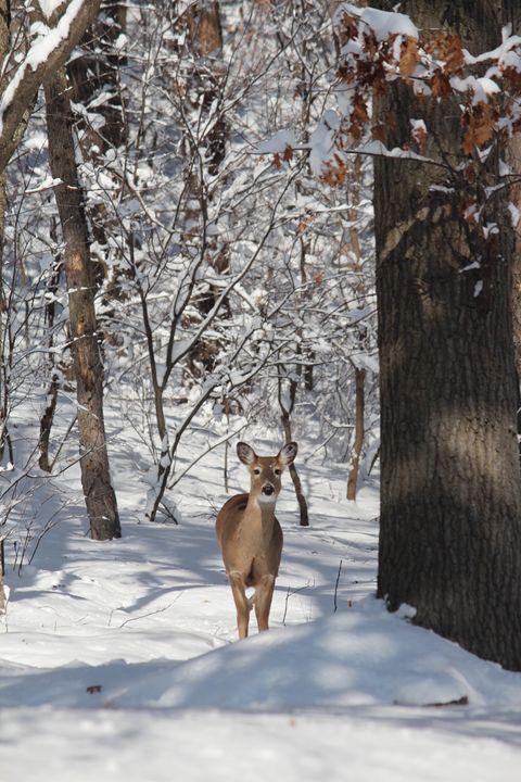 Deer Wonderland - Beauty of Nature