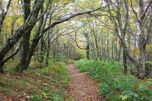 Craggy Gardens Pathway