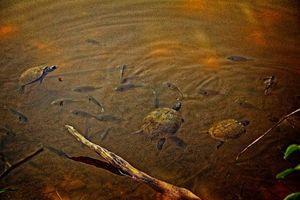 Beaver Lake Gathering
