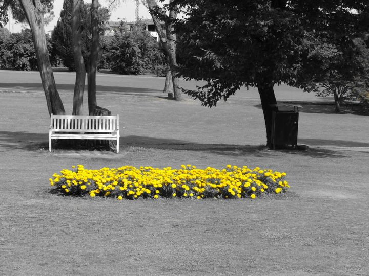 The bench of the yellow flowers - LaMa