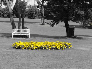 The bench of the yellow flowers