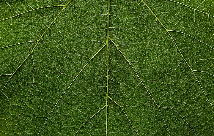 Nature texture - jurekralj