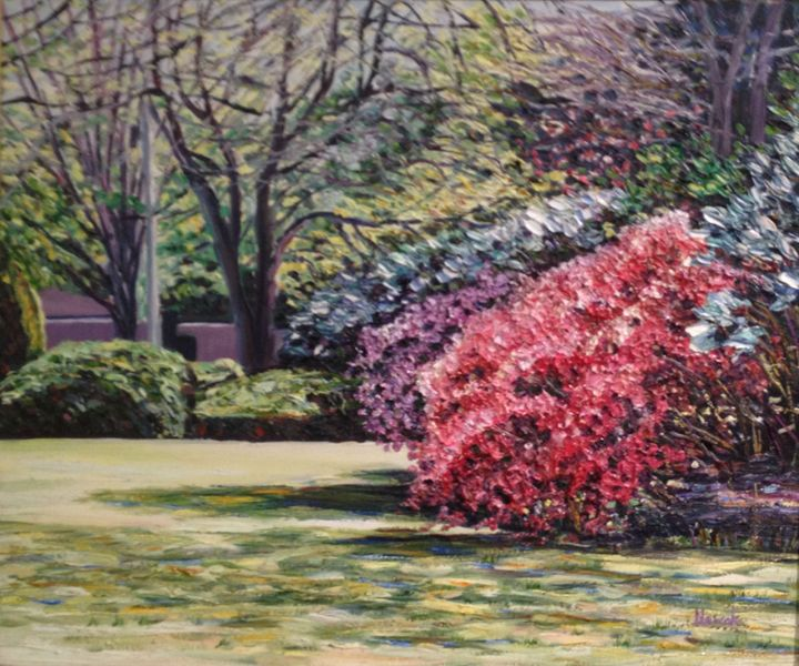 Veterans Park Spring Blossoms - Richard Nowak Fine Art