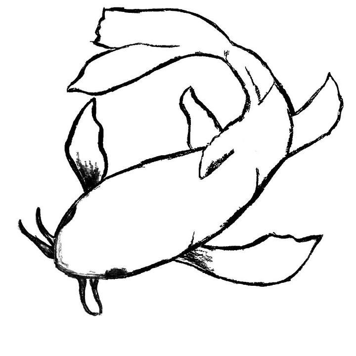 Koi Fish Sketch - Creativecrybaby