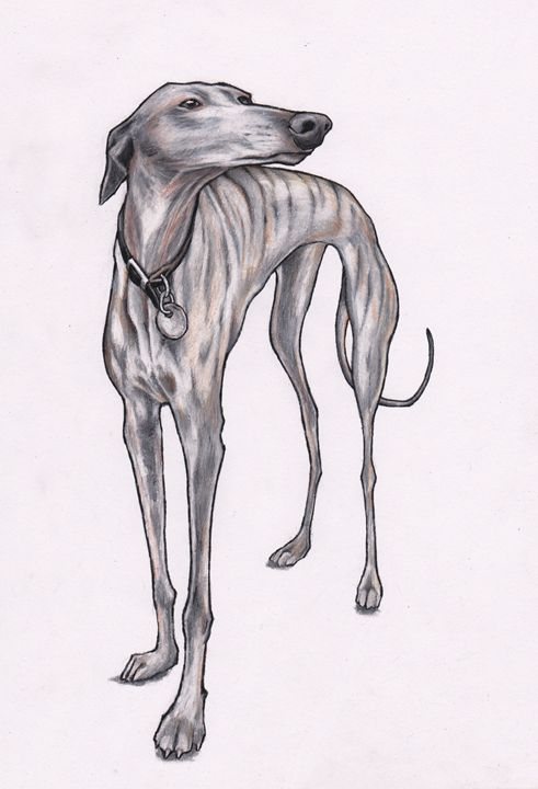 Olive Whippet - Jim Griffiths Art