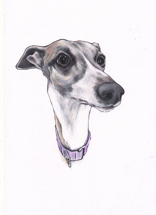 Holly Whippet - Jim Griffiths Art