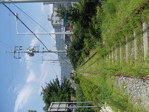 Green Train Track