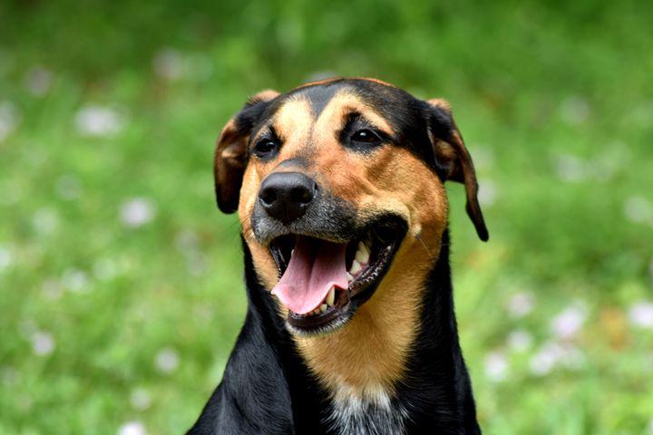 Smiley Dog - Water Dog Treasures