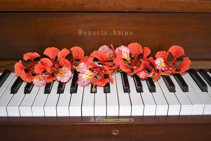 Piano's Poinciana Flower. - Diana Iglesias
