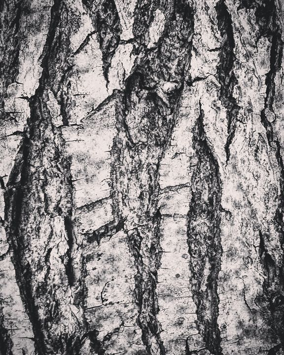 Tree Skin - Aroura Abstract Art