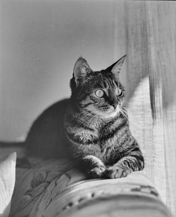Posing cat - SimunRuscic