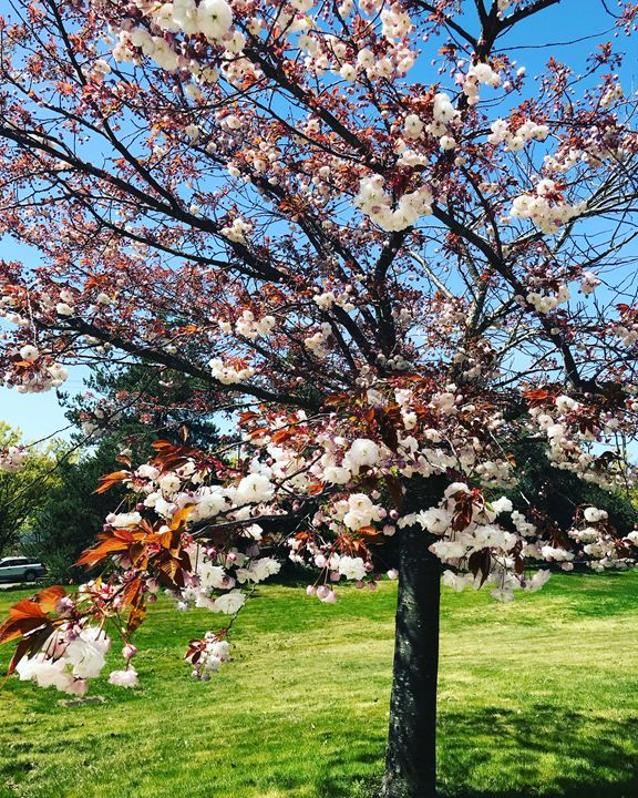 Nature - Cedar Catherine