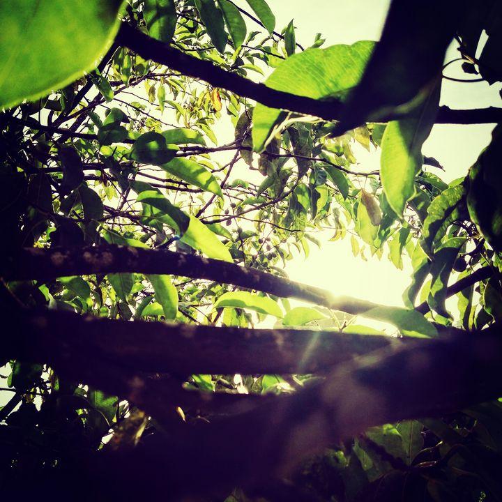 Leaf - AURA
