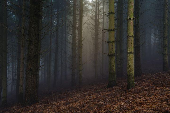 Forbidden forest - Babus Patrik