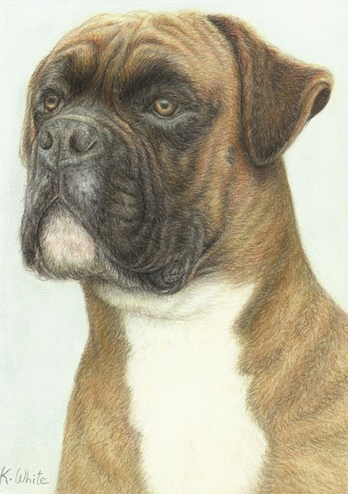 Boxer dog - Karen White