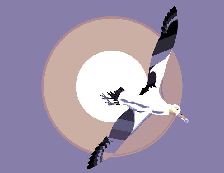 Albatross soaring with wings spread - DICK GAGE