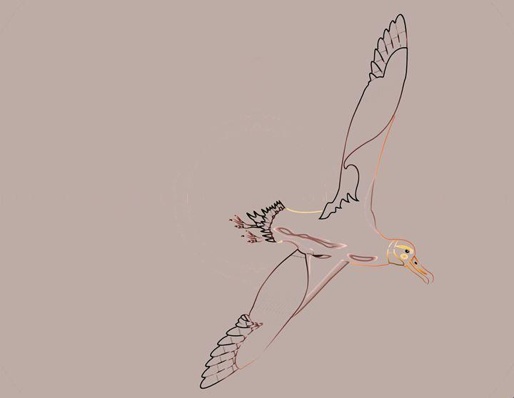 Line Drawing of Albatross - DICK GAGE