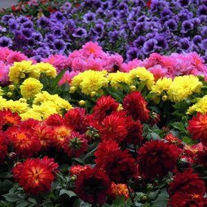 Beautiful garden of flowers