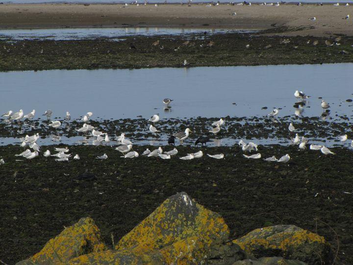 Seagulls - Eilidh Campbell