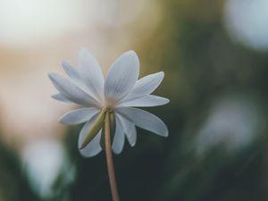 Flower on blurred background