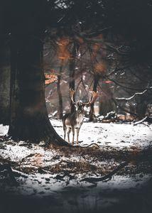 Deer in snowy scene