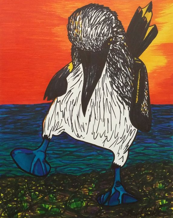 Blue Footed Booby in the Sunset - Morgan Carroll Art