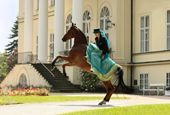 Victoria Hofferson - Equine Art