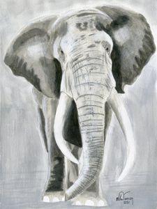 African Elephant Grey