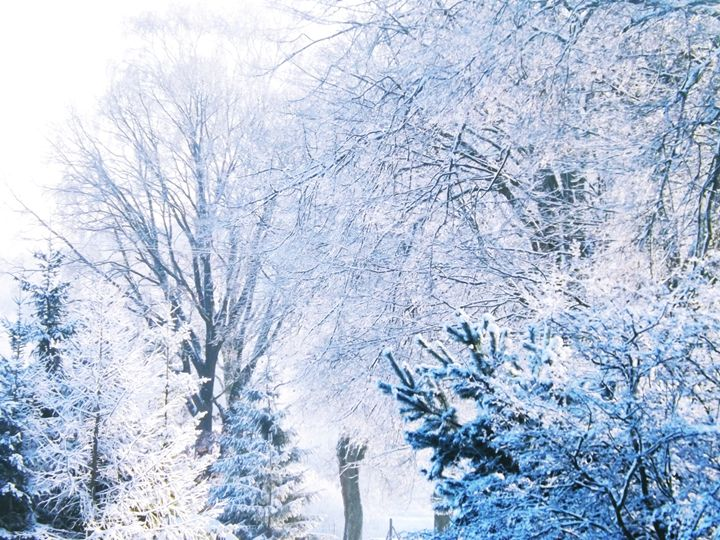 BLUE WINTER - PHOTOGRAPHY