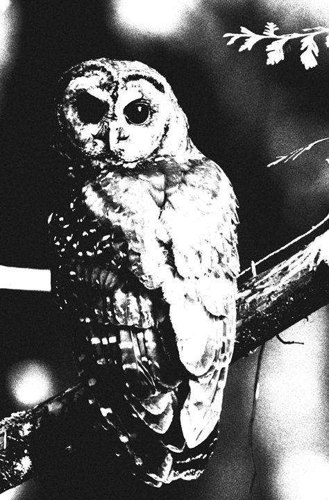 Owl - EnigmaFreudd
