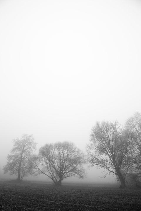 tree in fog - yuhymuk
