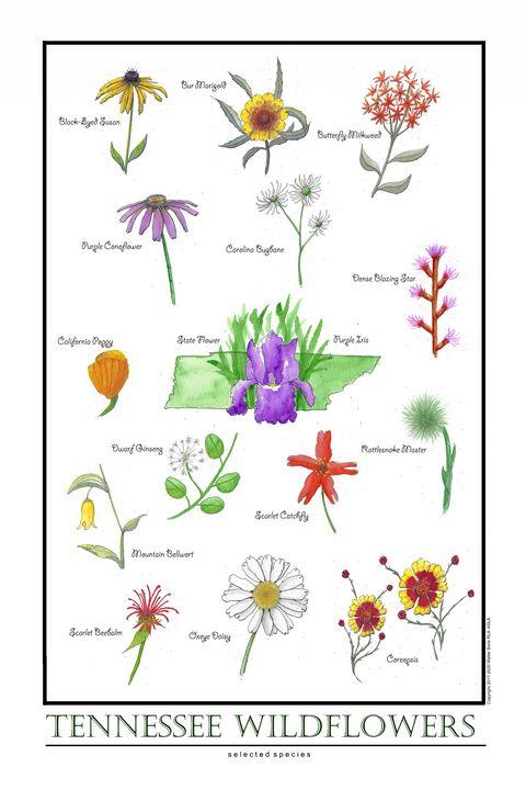 Tennessee Wildflowers - Buster Bone