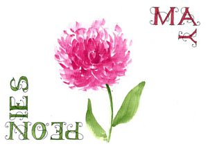 May-Peonies