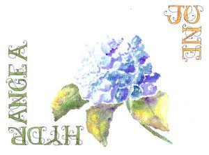 June-Hydrangea